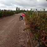 Bici por la viña