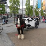 Horse-drawn cart in Eyre Park