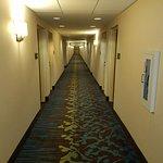 Hampton Inn & Suites Clearwater / St. Petersburg - Ulmerton Road Foto