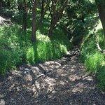 lush walking paths