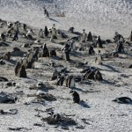The main area for penguin nests