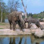 Fotografie: Zoo Praha
