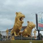 Photo of Golden Lion