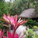 Photo of Coconut Bay Resort