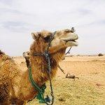 Zayan Travel - Day Tours