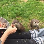 me feeding more otters