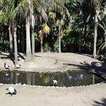 World of Birds Foto