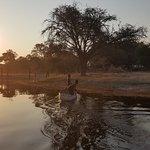 Photo de Okavango River