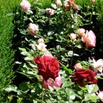Gardens at Real Alcazar
