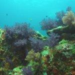 Beautiful soft corals at Hin Daeng