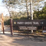 Torrey Pines State Natural Reserve - trailhead