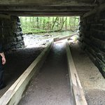 The tunnel on the trail