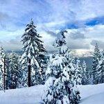Photo of Ski Homewood
