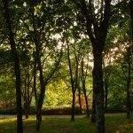 Arboleda en parque