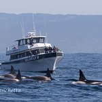 Monterey Bay Whale Watch