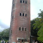 Tower in rain forest
