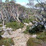 Rocky rough terrain