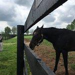Foto de WinStar Farm