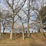Foto de High Park