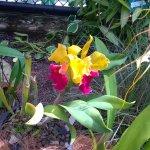 Photo de Cairns Botanic Gardens