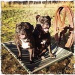 Mia and Albi - cellar door dogs!