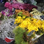 Flowers for sale at the Farm Gate Market