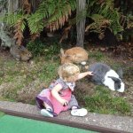 Mini Golf New Zealand