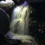 Foto de Sueños del Bosque