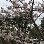 Photo of Odawara Castle Park