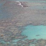 extensive reef