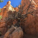 Red Canyon in Dixie National Forest (2)