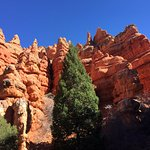 Enjoying Red Canyon