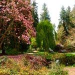 a magnolia losing its blossoms