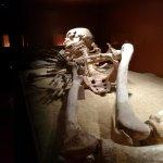 """Pepita"". Esqueleto epipleolítico expuesto en la sala de prehistoria"