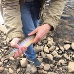 Brown Trout fishing Guide