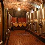 Wine barrels cellar