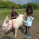 Donkey walking & grooming £5 donation per person.