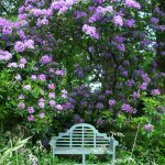 Double Purple Rhododenron with Luyens garden seat