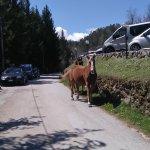 """cavalli """"al pascolo"""" di fronte all'hotel"""