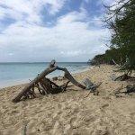 The beach at Buck Island