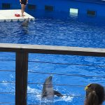 Dolphin Greeting