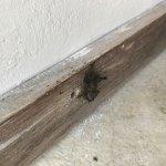 Upper terrace ant nest in bathroom
