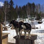 Entre chien et loup Photo