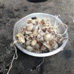 Scraps of cocoons