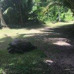 Photo de Hilton Seychelles Labriz Resort & Spa