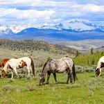 Imagen de C Lazy U Ranch
