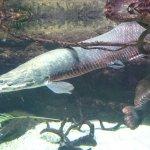 Foto de Osaka Aquarium Kaiyukan