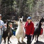 The llama crew - Diego, Mardi and Loki