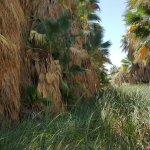 Foto de Coachella Valley Preserve