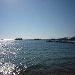 Photo of Shark's Bay Beach